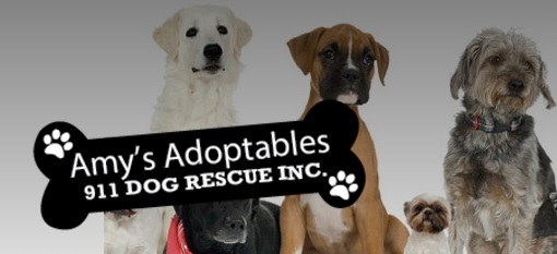 Amy's Adoptables and 911 Dog Rescue