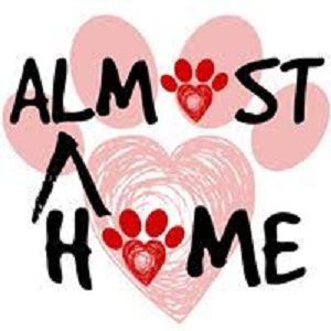 Amost Home Dog Rescue and Rehab