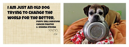 Leo Puppy Mill Survivor