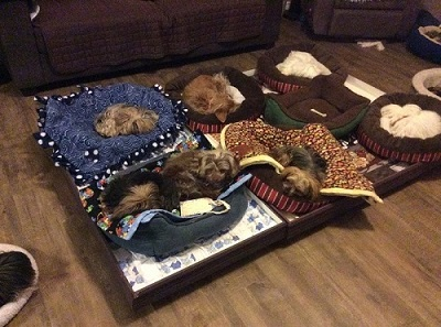 Small Paws Retirement Village
